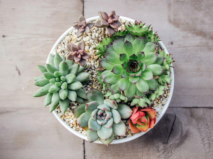 top view of a bowl full of succulents