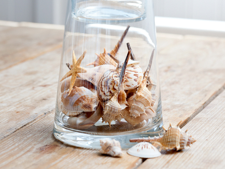 clear jar full of shells