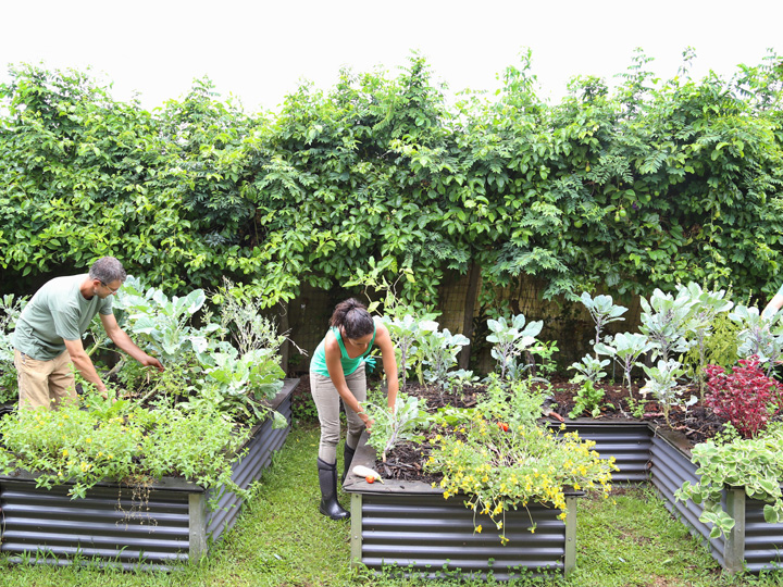 two people working on raised garden beds