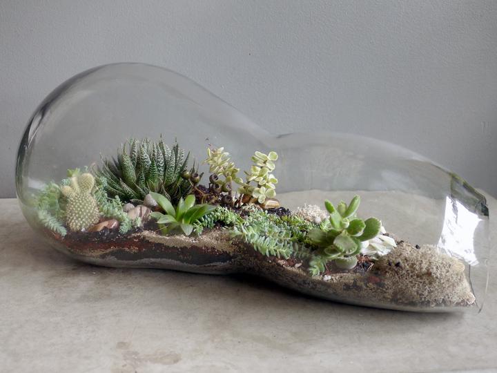 a glass terrarium
