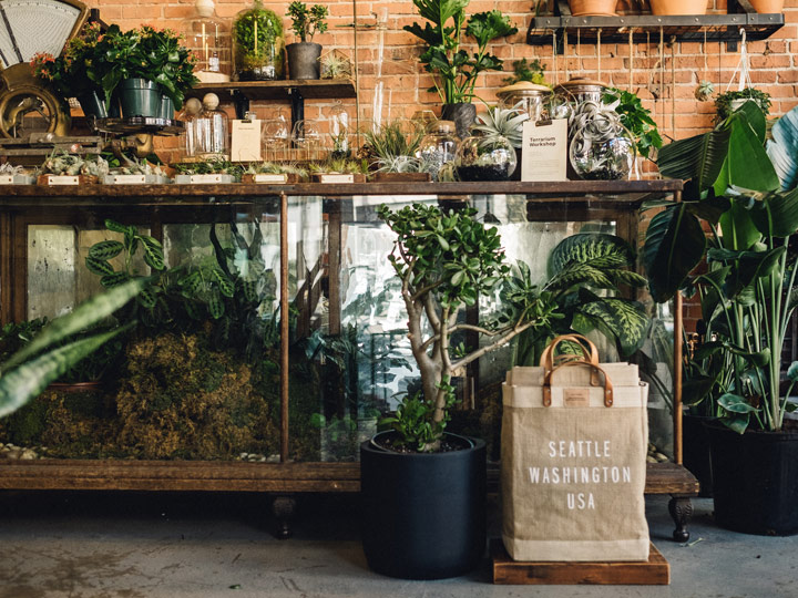 store interior filled with glass and plants