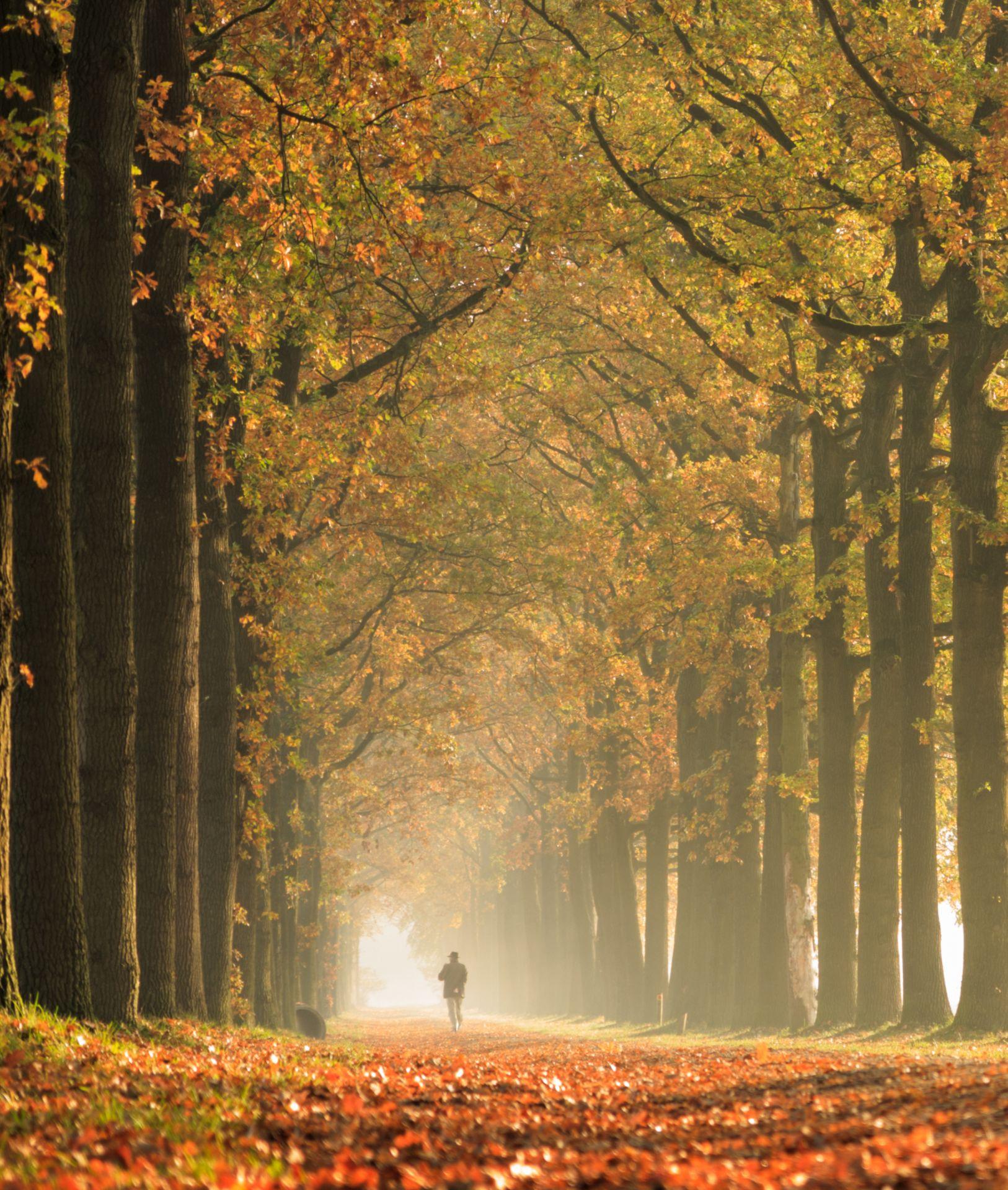 man walking through autmunal woodland
