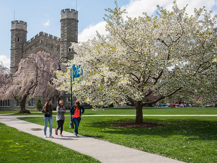 Green grass with blossoming cherry trees and college buildings in the background