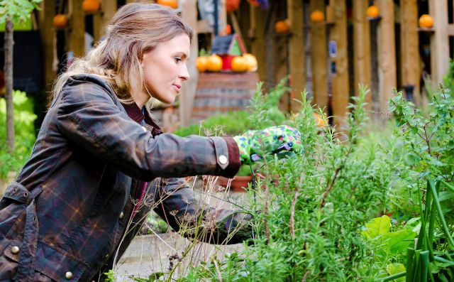 Woman in a garden, taking care of plants, pruning.