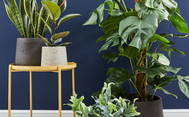 House plants against a dark blue background