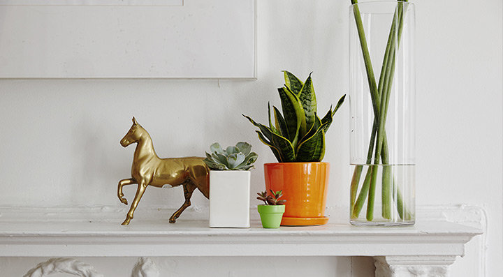 potted plant on mantle