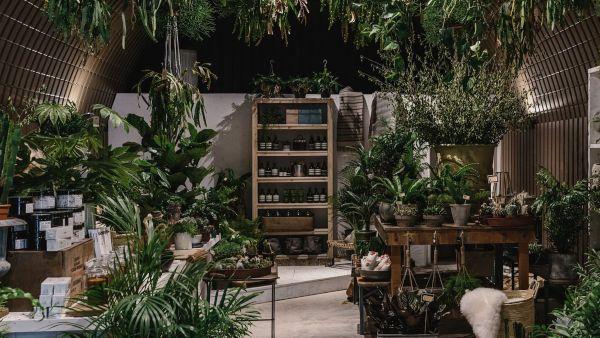 forest.london, East Dulwich, Deptford, London, House Plants