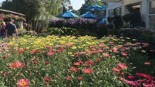 Wildflowers at Alexandra Palace Garden Centre