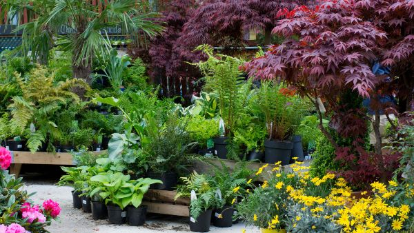 plants at camden garden centre