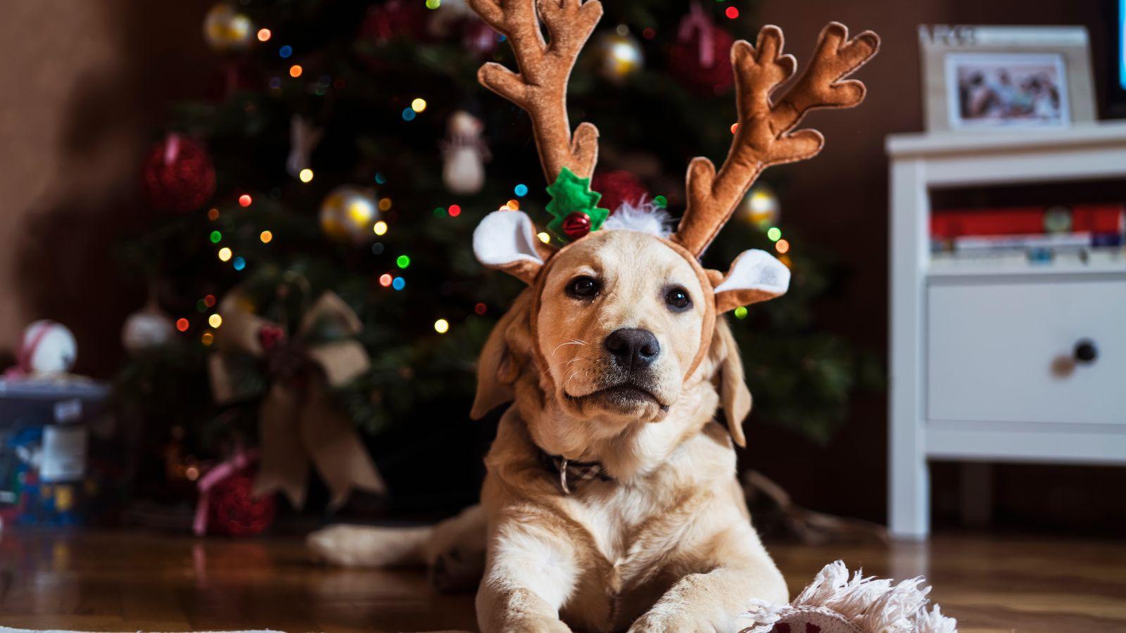 Doggo with antlers