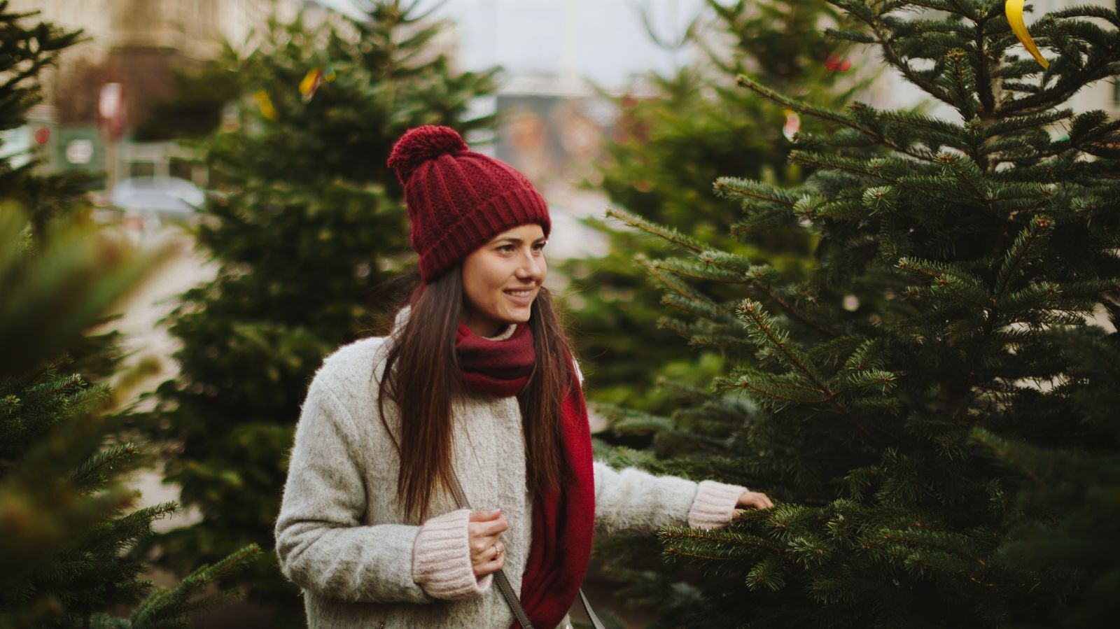 Finding a Christmas tree