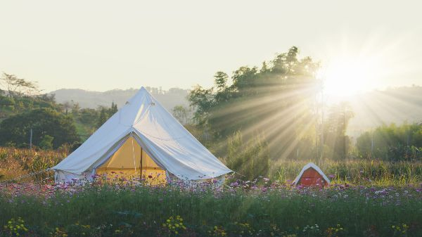 summer bell tent camping in wildflower field at sunrise