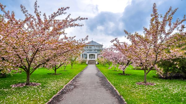 Cherry Walk, Kew Gardens