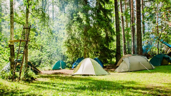 campsite on the edge of a forest