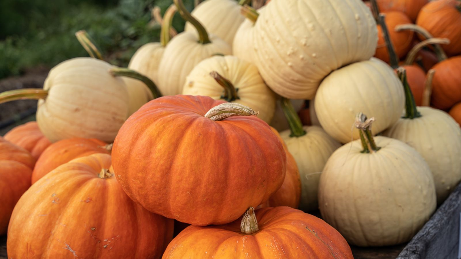a mound of pumpkins