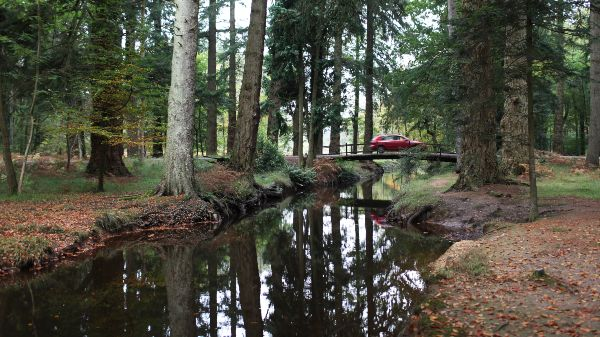 New forest, with bridge and a red car