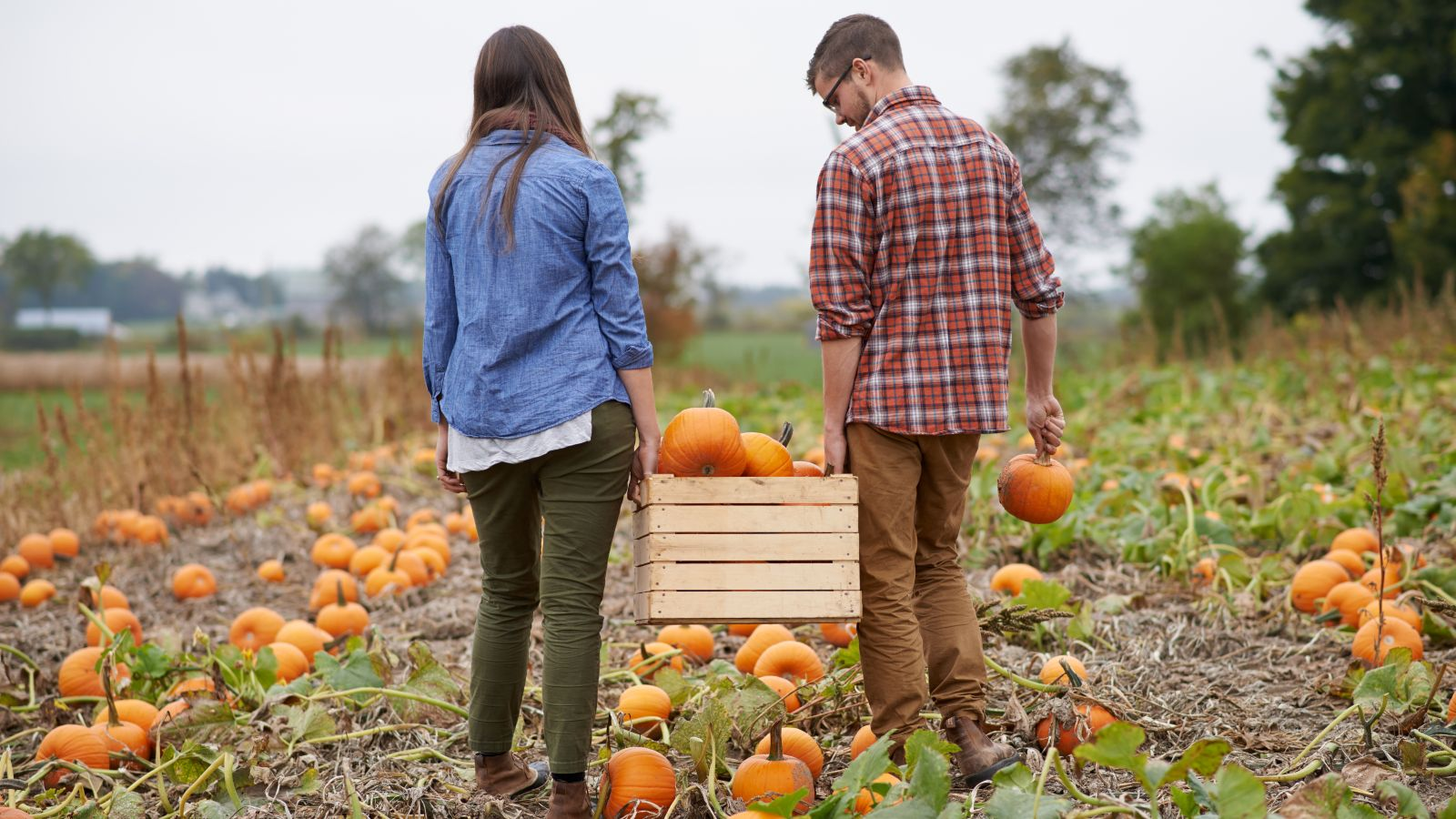 a couple pumpkin picking