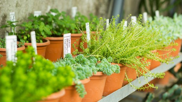 plants for sale in a garden centre