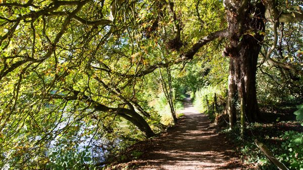 trees over a riverside path