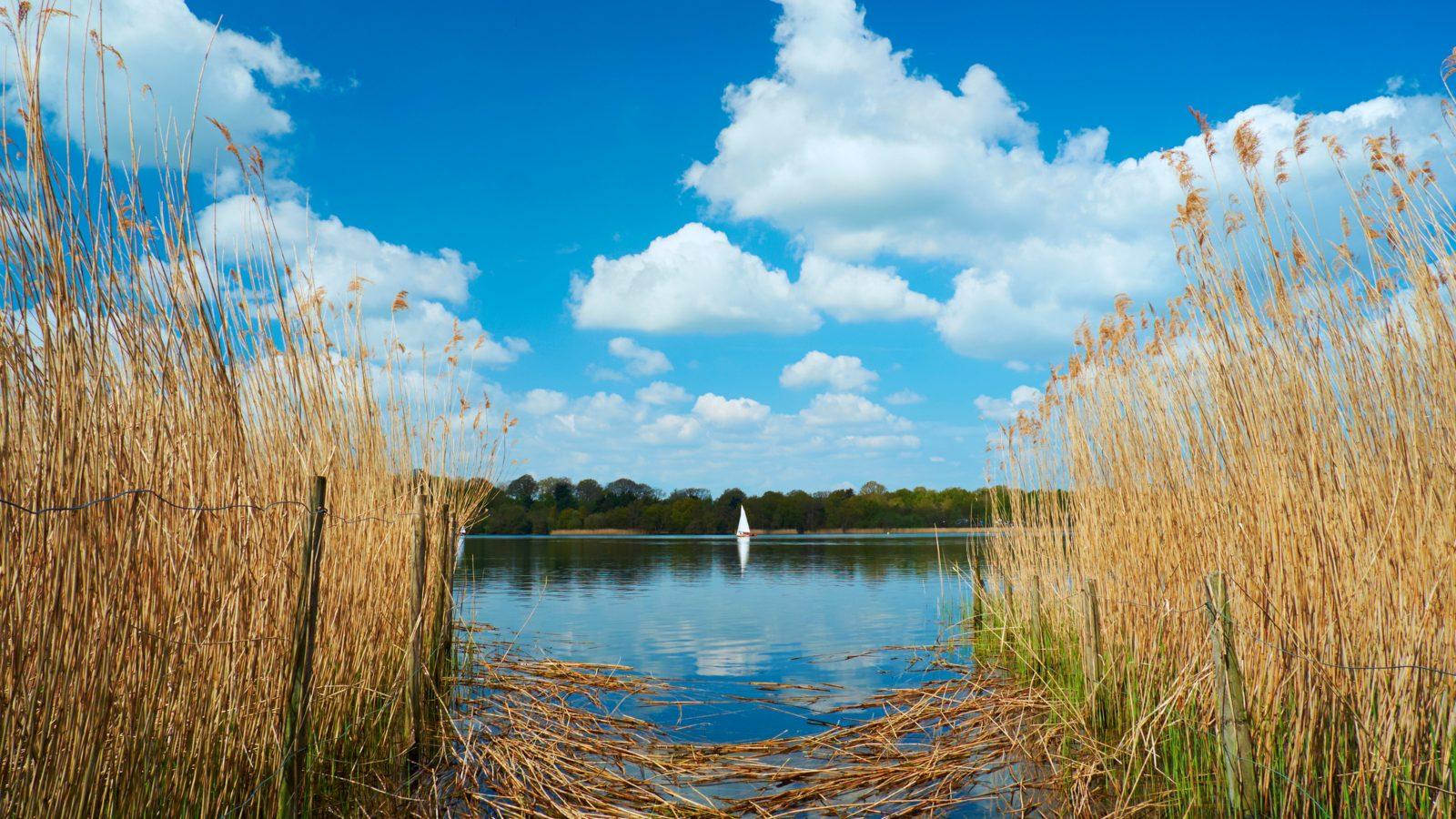 frensham pond wild swimming zipcar