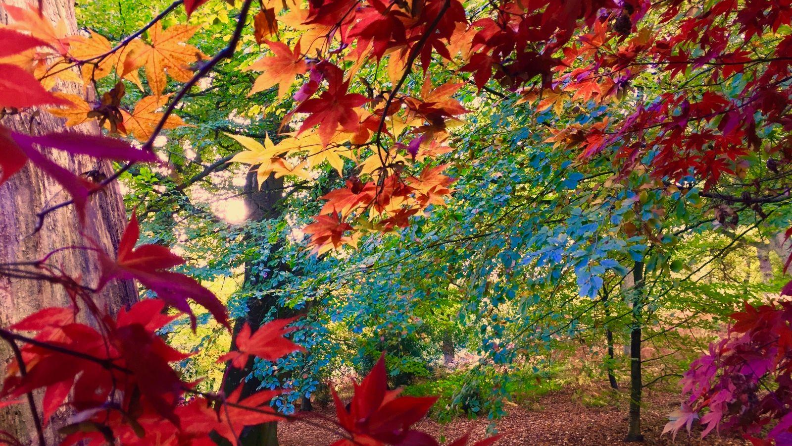 Winkworth arboretum