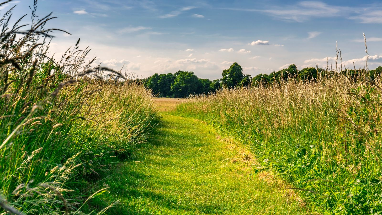 pathway through a meadow