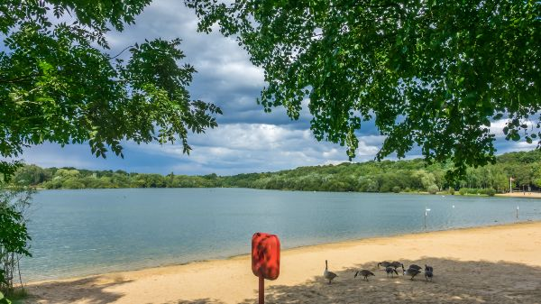 ruislip lido with geese on the sand