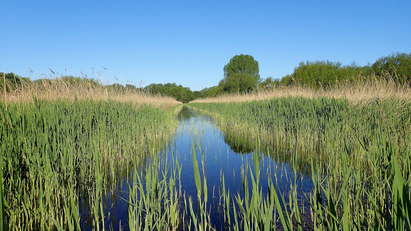 Nature reserve reed bed